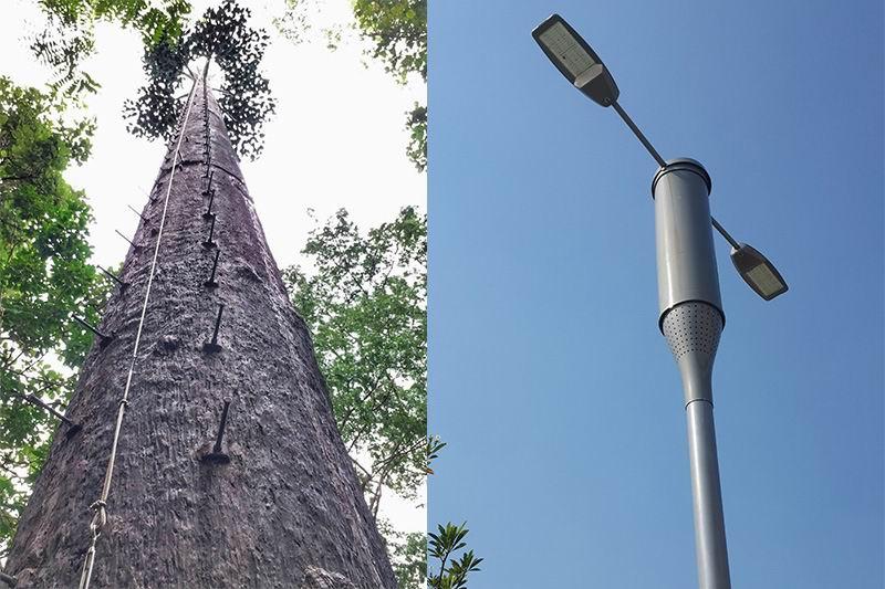 อะไรจะเกิดขึ้น เมื่อเสาสัญญาณดีแทคมาในรูปแบบต้นไม้