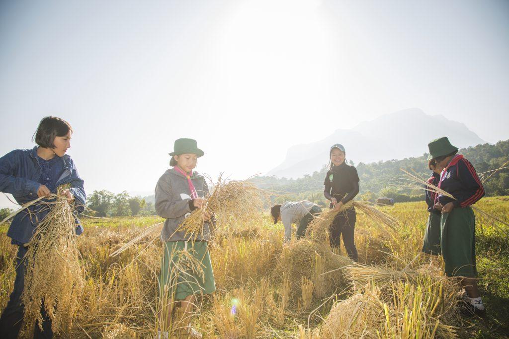 เกษตรกรยุคดิจิทัล…ออนไลน์อินทรีย์จากต้นน้ำถึงปลายน้ำ
