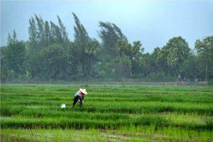 เปิดรับสมัครแล้ว เกษตรกรสำนึกรักบ้านเกิด ปี 2563 ดีแทคร่วมกับมูลนิธิรักบ้านเกิด เฟ้นหาเกษตรกรที่พร้อมยกระดับสู่ผู้ประกอบการส่งออก